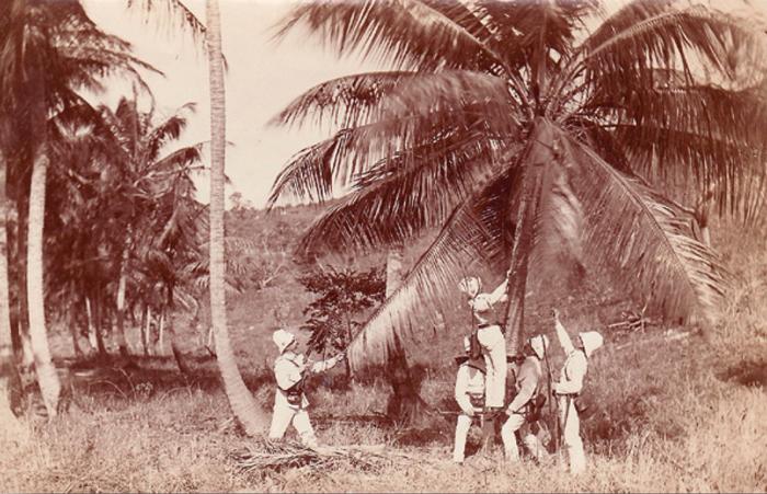 Postkort af gendarmer på kokosnødderov