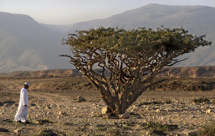 Mand og træ i Oman